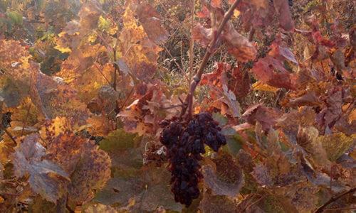 winehousevineyards10