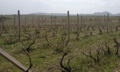 winehousevineyards14