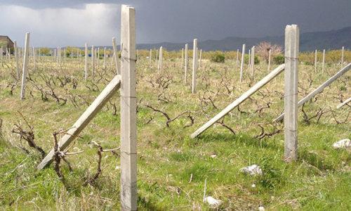 winehousevineyards15