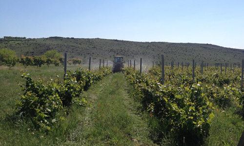 winehousevineyards2